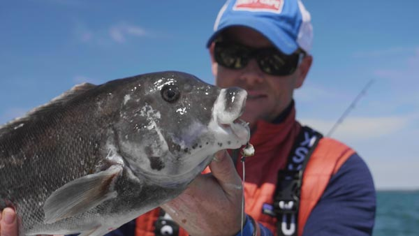 How-To-Catch-Tautog-BuzzardsBay